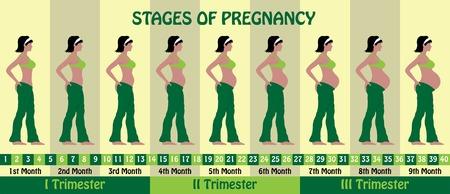 Fasi della gravidanza con una donna incinta che indossa reggiseno e pigiami larghi. Tutti gli oggetti e gli stadi del corpo sono in livelli diversi e i tipi di testo non necessitano di alcun carattere.