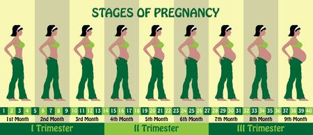 Stages of pregnancy with a pregnant woman wearing bra and baggy pajamas. All the objects and body stages are in different layers and the text types do not need any font. Ilustração