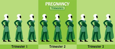 Pregnancy trimesters All types of objects Illustration