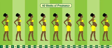 40 Weeks of pregnancy stages. All types of objects Vektorové ilustrace
