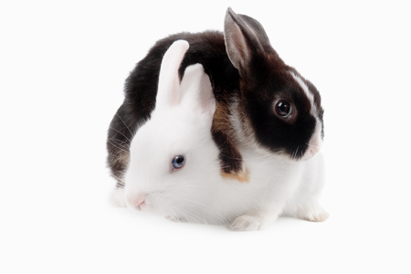 beautiful rabbit: Black and white rabbit on each other on a white background
