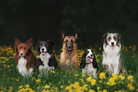 Four dogs sitting in the park on the green grass. Training. Archivio Fotografico