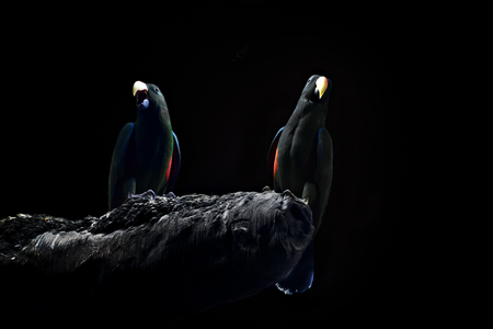 the two parrots: Two parrots from the Moscow Zoo indoor