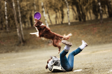 Border collie dog catching frisbee in jump in summer day Archivio Fotografico