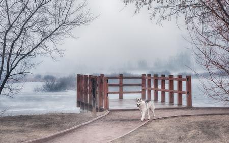 plaintive: Siberian husky dog in Beautiful Gothic scenery. Nature