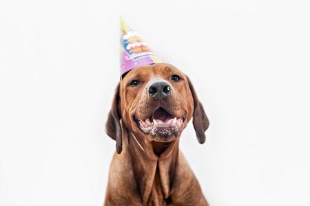 Dog celebrating birthday having a birthday party Archivio Fotografico
