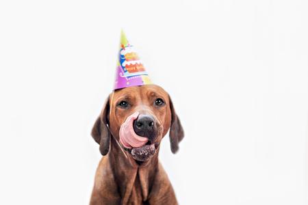 犬の誕生日パーティー誕生日を祝って