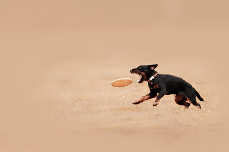 A picture of a fast dog running on the grass