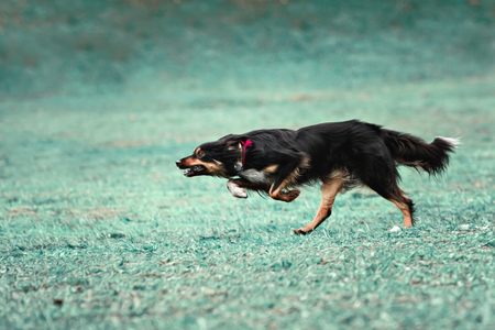 running nose: A picture of a fast dog running on the grass