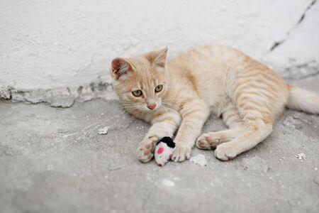 mignons chatons sans-abri regardant la caméra et jouant