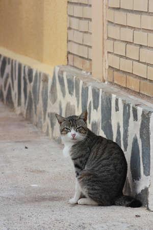 street cat Stock Photo - 9071654