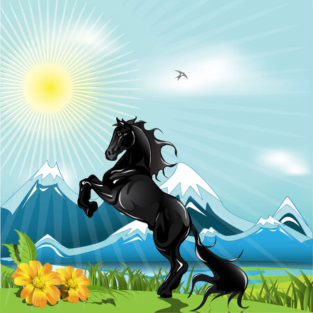 filly: Black horse  Illustration