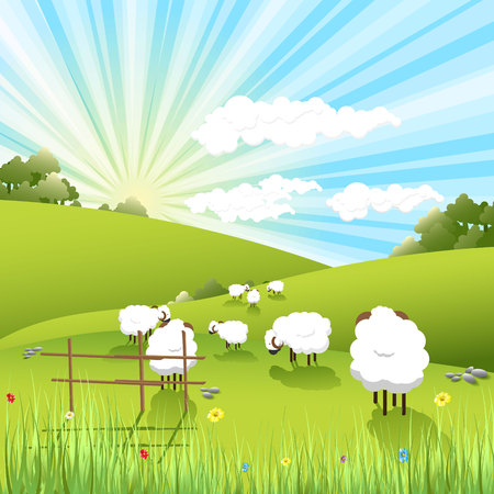 agriculture field: sheeps Illustration