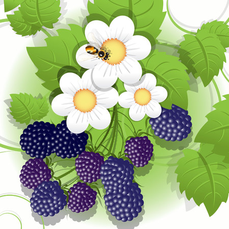 mure: BlackBerry