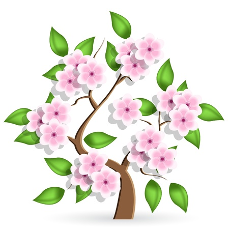 cherry wood: cerise tree Illustration