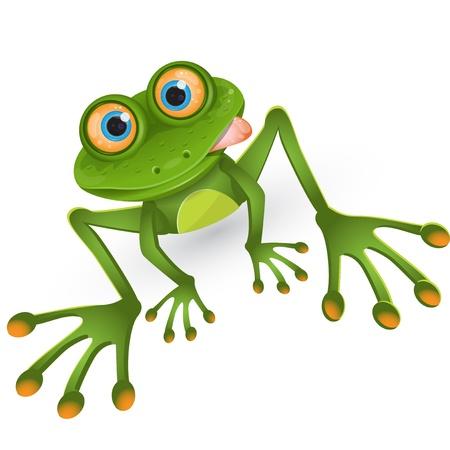 лягушка: лягушка Иллюстрация