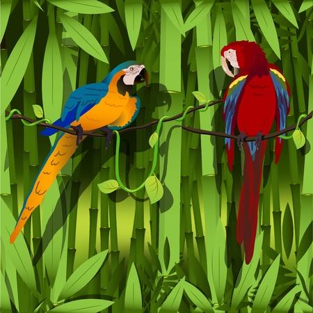 loros verdes: ilustración, dos loros brillantes en una rama de liana