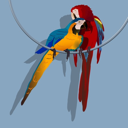 illustration, two bright parrot on the ring
