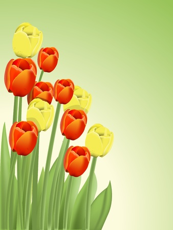illustration of a bouquet of red and yellow tulips Vector