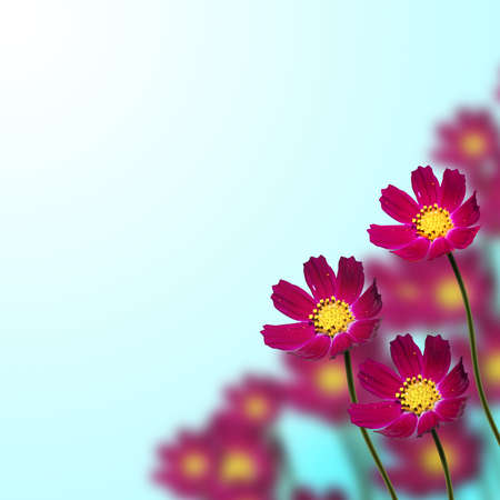 red flowers on thin stems on a blue background Stock Photo - 14742996