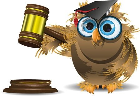 judge hammer: illustration of an owl in a cap with a judge gavel