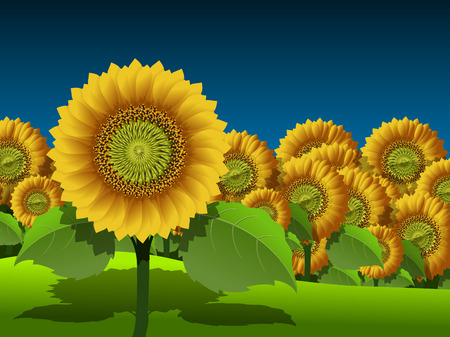 garden plant: Illustration of a field of yellow sunflowers