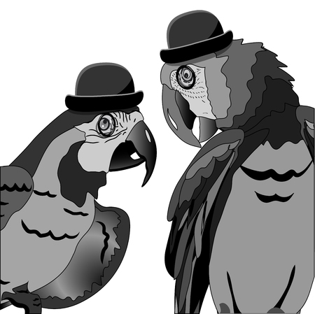 bowler hat: Illustration The Dispute of Two Parrots in Hat Bowler