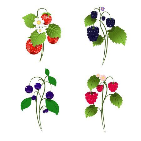 Set di illustrazione di quattro cespugli di bacche su sfondo bianco