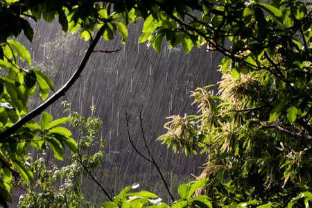 Rain Imagens