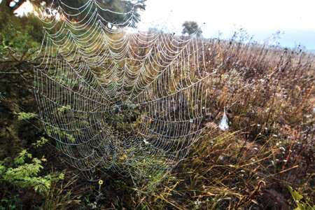 Spider Man in the Morning Stockfoto