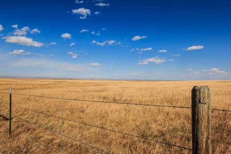 Montana Fields