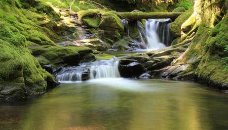 source d eau: A cascades cascade tranquilles dans une mousse recouvert de bois grotte