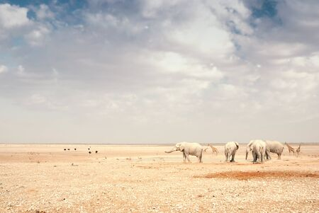 Wide shot of a group of African elephants at a watering hole Stockfoto