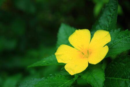 Yellow Fresh Flower Stock Photo