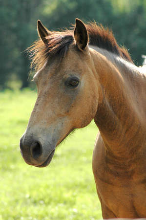 Horse Banco de Imagens