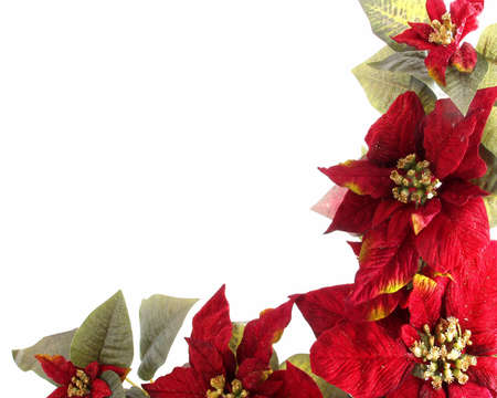 Poinsetta Border Stock Photo - 659058