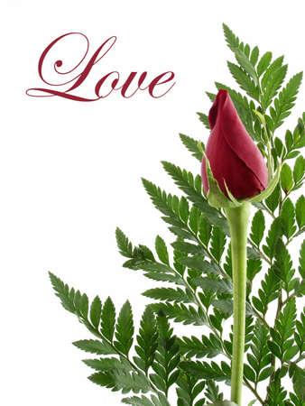 Red Rose Bud Love