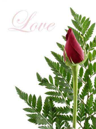 Rose bud Love