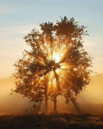 Beams of morning sun filtering through the tree and fog. photo