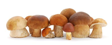 Mushrooms isolated on white background photo