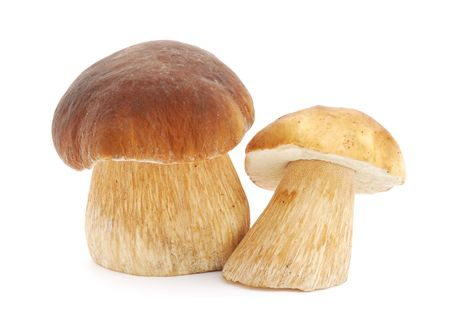 Boletus edulis on white background photo