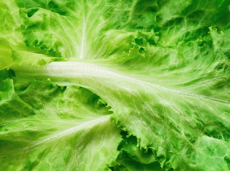 Lettuce background photo