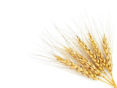 cereal ear: Rye ears isolated on white background Stock Photo