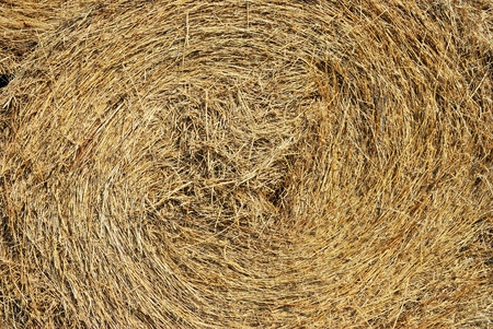 Close-up of a haystack photo