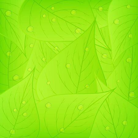 waterdrop: Green leaves with water drops Illustration
