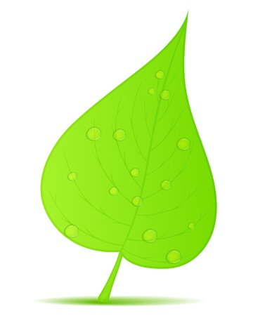 recycle tree: Green leaf with water drops