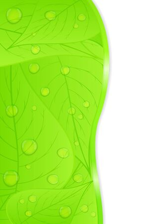 leaf water drop: background with green leaves Illustration