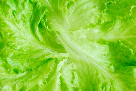 Fresh lettuce, top view