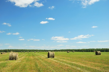 Green field with hay bales photo