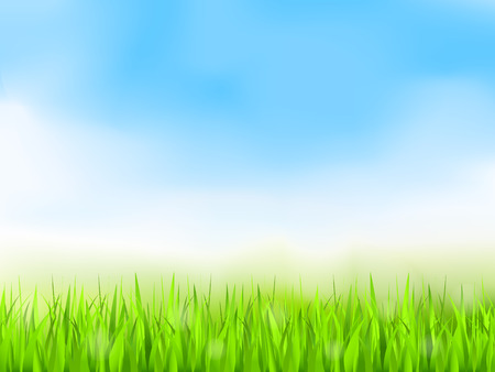 zomertuin: Groen gras en blauwe hemel, de zomer achtergrond